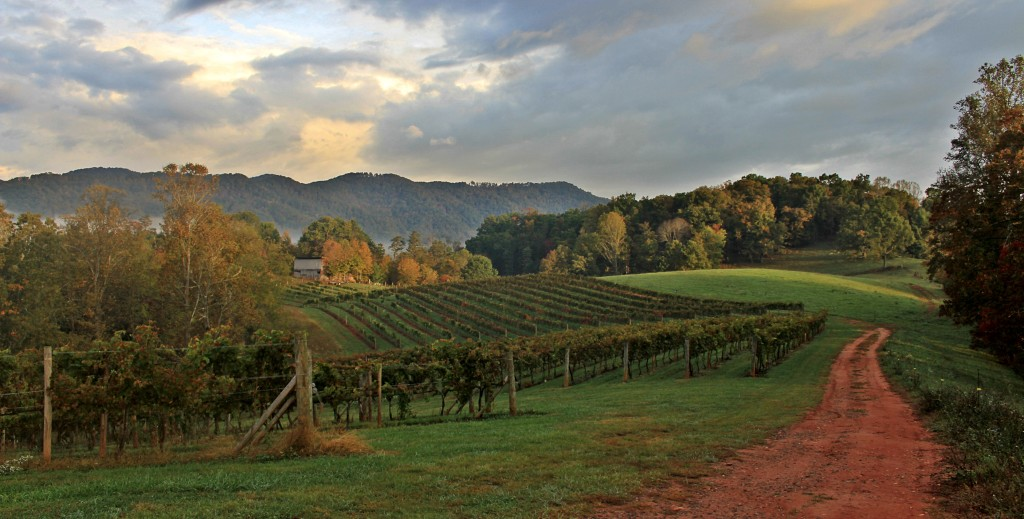 Visit a winery while on your custom bike tour in North Carolina