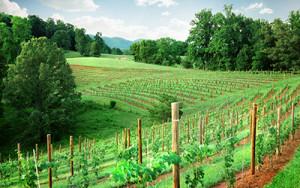 Addison Farms Vineyards is a Velo Girl Ride Partner