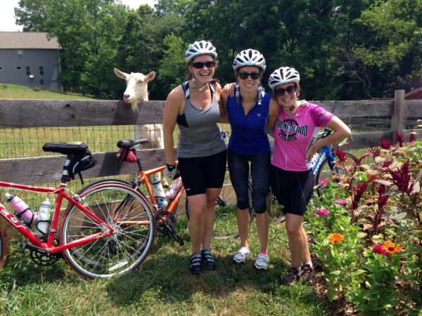 Cyclists and goats at Looking Glass Creamery